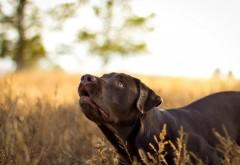 Взгляд собаки на природе заставки на рабочий стол hd