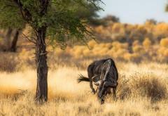 Африканская антилопа природа заставки на рабочий стол hd