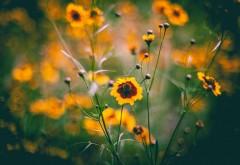Желтые цветы на поляне заставки на рабочий стол hd