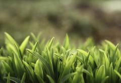 Макро снимок зелененькой травки