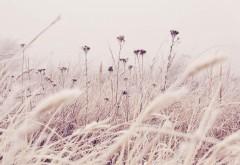 Трава, мороз, снег, природа, зима, hd, заставки