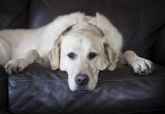 Собака заставки на рабочий стол hd