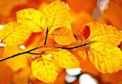 Осеняя листва заставки на рабочий стол hd