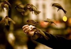 Воробьи в полете обои птиц широкоформатные обои скача�…