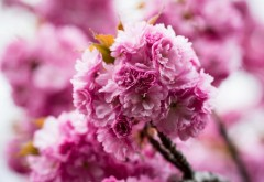 Spring pink flowers nature wallpaper high resolution hd