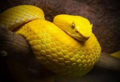 Фото желтой змеи