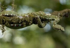 Snake branch bokeh wallpaper high resolution hd