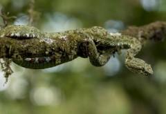 Snake branch bokeh wallpaper high resolution hd