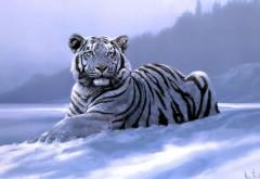 Фото сибирского тигра в снегу