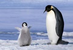Дайвинг в Антарктике пингвины