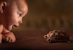 Фото малыша и черепахи на рабочий стол