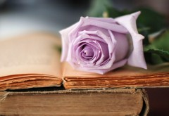 Роза цветок на книге картинки для рабочего стола скача…