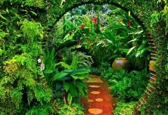 Красивый тропический сад