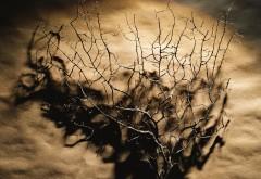 Сухой куст в пустыне картинки для рабочего стола скачать