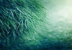 Зеленая трава картинки для рабочего стола скачать
