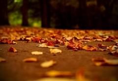 Осенняя аллейка в парке обои