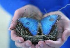 Голубая бабочка в гнезде скачать картинки бесплатно