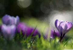 Сиреневые цветы на зеленой лужайке