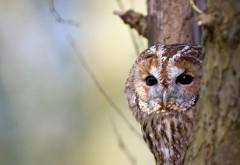Птица сова с большими глазами картинки скачать