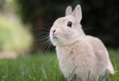 Милый кролик картинки для рабочего стола скачать