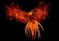 Феникс птица картинки для рабочего стола скачать