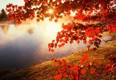 Красная осень картинки для рабочего стола скачать