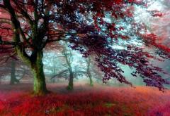 Красный эффект осенний лес картинки для рабочего стол�…