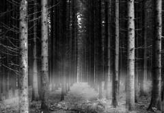 Лес Черно белые картинки для рабочего стола скачать