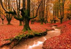 Красный лесные деревья картинки для рабочего стола ск�…
