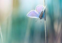 Бабочка макро картинки для рабочего стола скачать