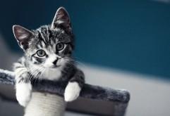 Милый котик картинки для рабочего стола скачать
