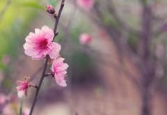 Цветы природа картинки для рабочего стола скачать