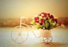 Романтические розы на велосипеде картинки для рабочег…