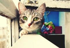 Милый серый кот с зелеными глазами картинки