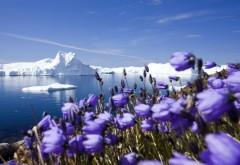 Фиолетовые арктические цветы картинки для рабочего ст…