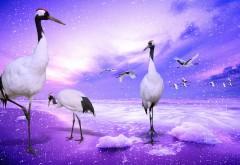 Венценосный журавль птицы картинки для рабочего стола…