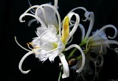Красивый цветок картинки для рабочего стола скачать