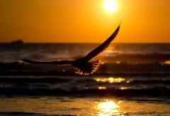 HD обои,  природа, морские волны, солнце, птица