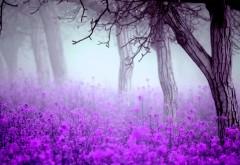 Туманный цветы, пурпурный лес картинки