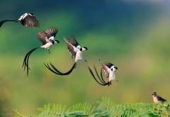 Певчая птичка полет картинки для рабочего стола скачать