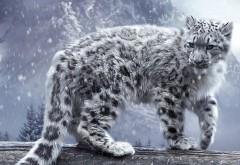 Обои яркого леопарда в горах