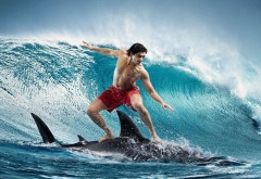 Обои серфингиста на акуле