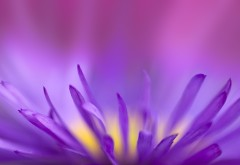 Фиолетовое пламя цветок макро картинки для рабочего с�…