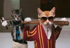 Юмористические обои котов бейсболистов в очках