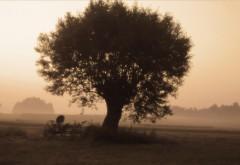 Дерево в поле картинки для рабочего стола скачать