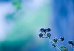 Макро картинки диких цветочков фоновые заставки