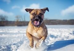 Веселый песик в зимнее время
