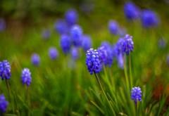 Гадючий лук цветы картинки для рабочего стола скачать