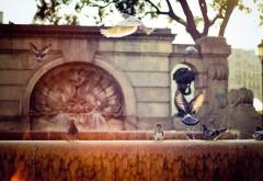 Голуби в городе картинки для рабочего стола скачать