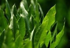 Зеленые листья макро картинки для рабочего стола скачать